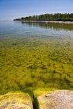 Mar de florescência Fotos de Stock