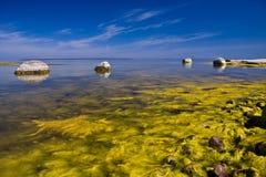 Mar de florescência Imagem de Stock
