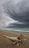 Mar de japão. Árvore quebrada 2 Imagens de Stock Royalty Free