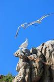 Mar de japão. Céu azul e gaivotas foto de stock
