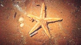 Mar de la estrella Imagenes de archivo