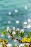 Mar de la hiedra Imágenes de archivo libres de regalías