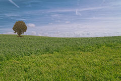 Mar de la hierba Fotografía de archivo libre de regalías