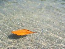 mar de la hoja Fotografía de archivo libre de regalías