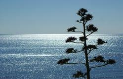 Mar de la luz con la planta Fotos de archivo libres de regalías