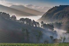 Mar de la niebla Fotos de archivo libres de regalías