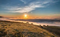Mar de la niebla en la puesta del sol foto de archivo