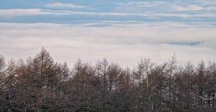 Mar de la niebla en Takabotchiyama, Okaya, Japón Fotografía de archivo