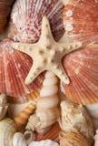 Mar de las conchas de berberecho imagenes de archivo