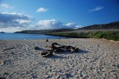 Mar de las Islas Gal3apagos Imagenes de archivo