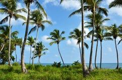 Mar de las palmeras Fotos de archivo
