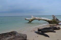 Mar de madeira Imagens de Stock