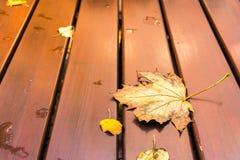Mar de madeira de Autumn Fall Nature Outdoors Peaceful da tabela da folha de bordo imagem de stock royalty free