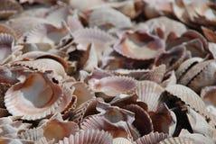 mar de shelles foto de archivo libre de regalías