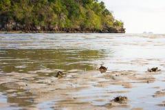 Mar de Tailandia Imagenes de archivo