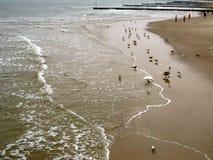 Mar del invierno de la gente que camina la playa y los pequeños pájaros mucho foto de archivo