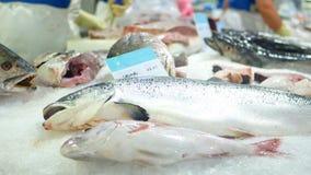 Mar del océano de los pescados del mercado metrajes