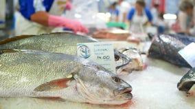 Mar del océano de los pescados del mercado almacen de video