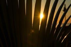 Mar del verano de la salida del sol Foto de archivo