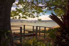 Mar detrás de los árboles Imagen de archivo libre de regalías