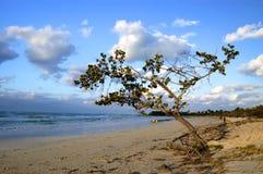 Mar do Cararibe com uma árvore Fotografia de Stock Royalty Free