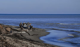 Mar do inverno Fotografia de Stock Royalty Free