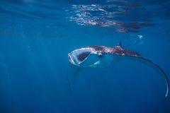 Mar do Manta Foto de Stock