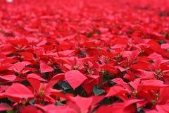 Mar do vermelho Fotos de Stock