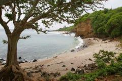 Mar e árvore Imagem de Stock Royalty Free