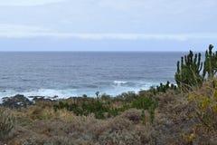 Mar e cacto, Garachico, Tenerife foto de stock royalty free