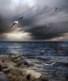 Mar e gaivotas Imagens de Stock Royalty Free