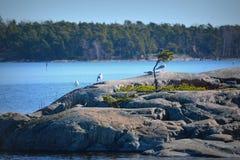 Mar e gaivotas Fotografia de Stock