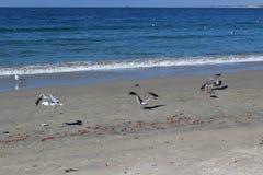 Mar e gaivotas Fotos de Stock
