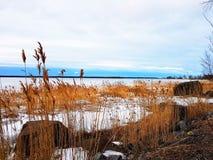 Mar e grama congelados Fotos de Stock