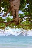Mar e isla del árbol foto de archivo