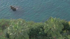 Mar e pedras subaquáticos Palmas verdes na costa disparada com polarizador video estoque