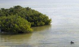 Mar e pelicano Imagens de Stock Royalty Free