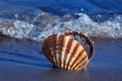 Mar e praia arenosa com escudo Foto de Stock Royalty Free