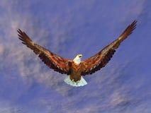 Mar Eagle Foto de Stock Royalty Free