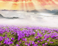 Mar enevoado Carpathians Fotografia de Stock Royalty Free