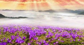 Mar enevoado Carpathians Imagens de Stock