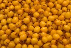 Mar-espino cerval Fotografía de archivo libre de regalías