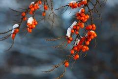 Mar-espino cerval Foto de archivo