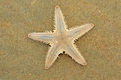 Mar-estrela Foto de Stock