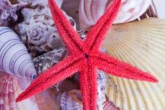 Mar-estrela e escudos Foto de Stock Royalty Free