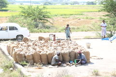 Packing of harvested paddy. Mar 11, 2015.harvested grains from paddy fields were cleaned seperated from sand and stones and packed in gunny bags with the help of Stock Image