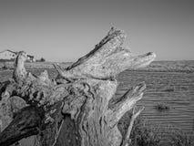 Mar interior de la madera de deriva imagenes de archivo