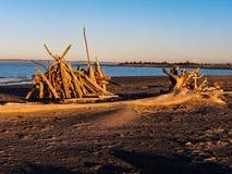 Mar interior de la madera de deriva imagen de archivo libre de regalías