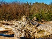 Mar interior de la madera de deriva fotos de archivo libres de regalías
