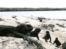 Mar Iquana Imagens de Stock